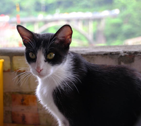 Visiting Taiwan's cat village, where the cats are ready for cuddles!【Photos】
