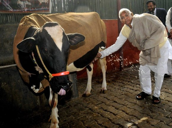 india-has-the-worlds-largest-dairy-cow-population