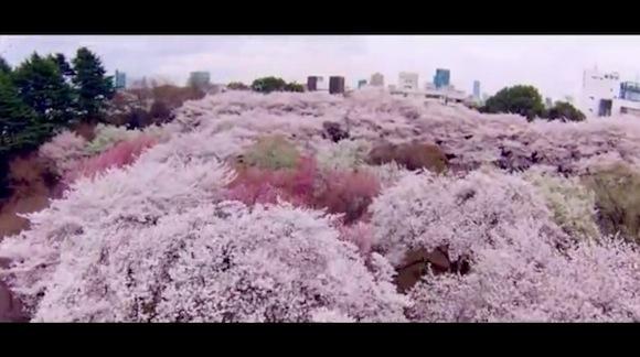 Japan video 4