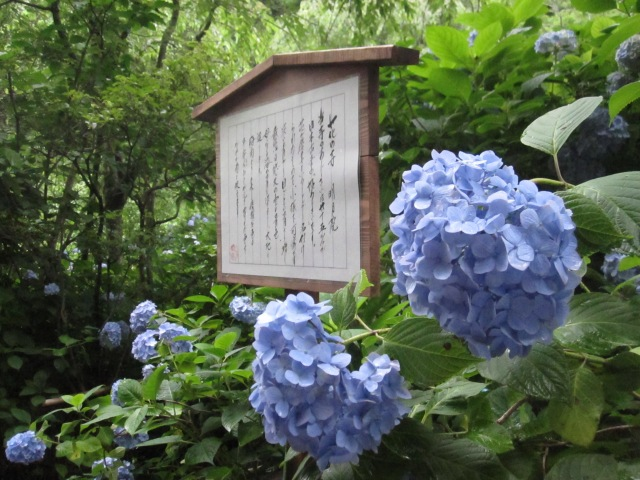 The beautiful flowers of Hydrangea Temple: Possibly the best thing about Japan's rainy season