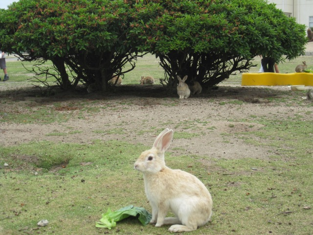 Japan's Rabbit Island – Yes, it really does exist