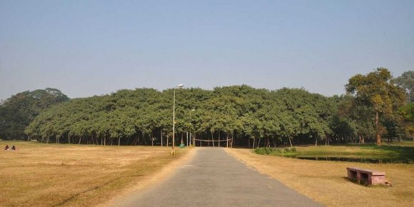A Tree In India Is Bigger Than The Average Wal-Mart