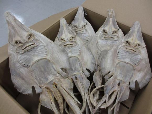 alien stingray 1