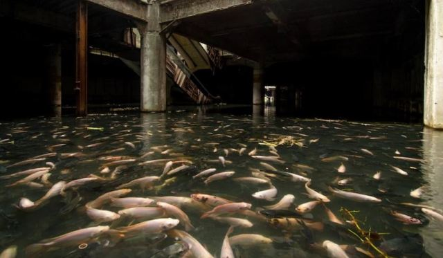 Hundreds of fish take over abandoned shopping mall in Bangkok