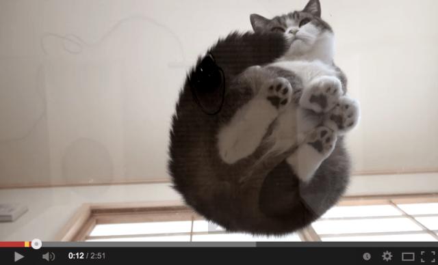 Unfamiliar glimpses of Japan's favorite cat duo【Video】