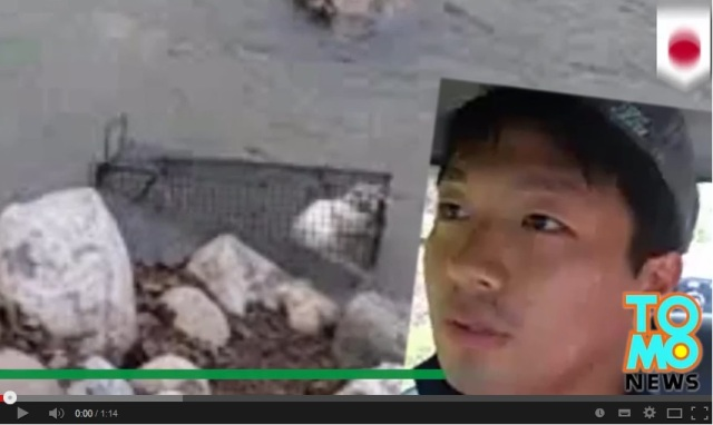 Nagano man questioned by police for broadcasting himself drowning a cat in the river