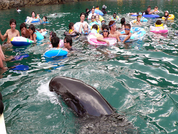 Visitors to this Wakayama beach get to swim with whales this summer