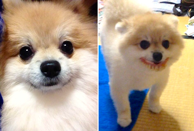 Cute puppy goes to grandmother's house and finds dentures for toothy grin, hilarious photo op
