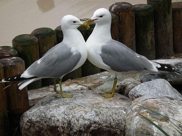 bird_couple