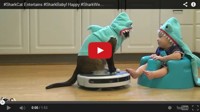 Shark Cat entertaining Shark Baby while riding a Roomba? Why not!