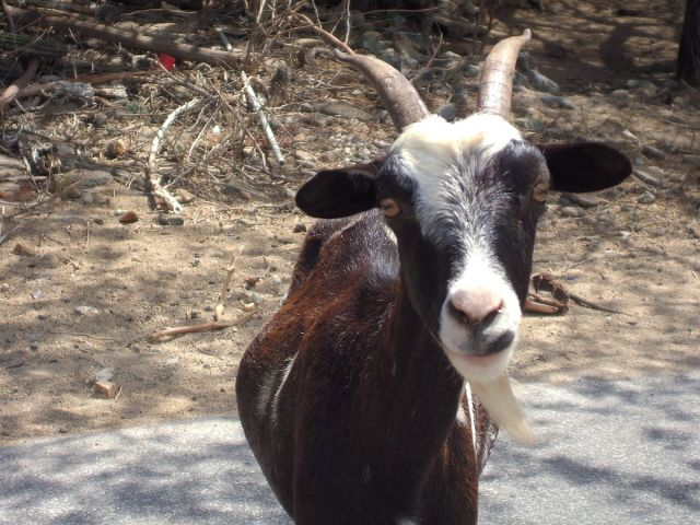 Two members of the Goat Weeding Corps believed to have been abducted in Gifu while on duty