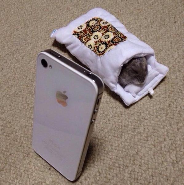 Hamster steals iPhone's mini futon