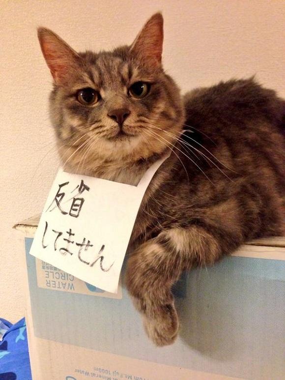 badcat (4)