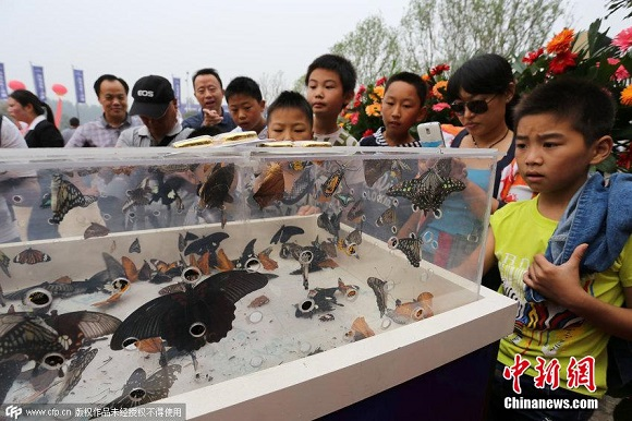 A sad turn of events at a butterfly exhibition in China