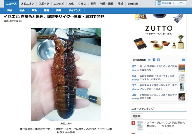 Is it another creepy Japanese iPhone case? No, it's a multicoloured hermaphrodite lobster!