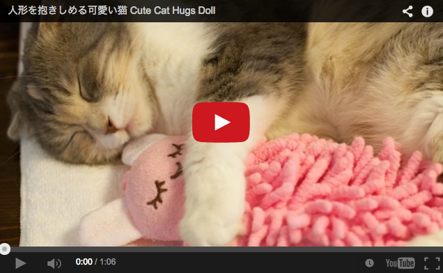 Sleepy kitty snuggling with a stuffed animal is the most adorable thing you'll see all day