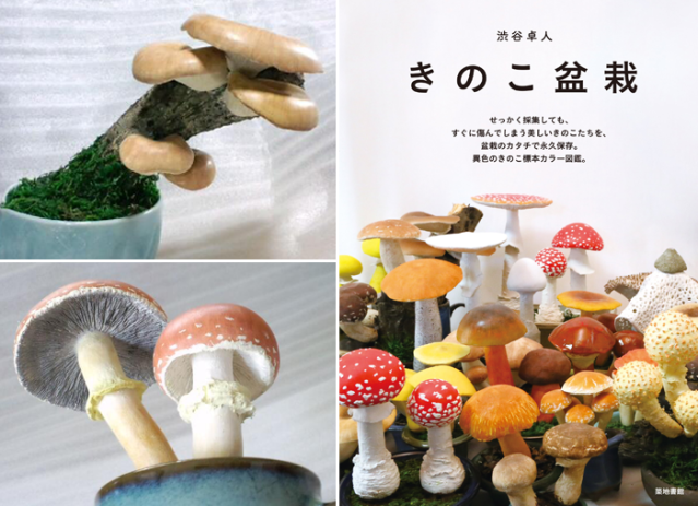 They're not real?! Exploring the detailed, colorful world of Takuto Shibuya's mushroom bonsai