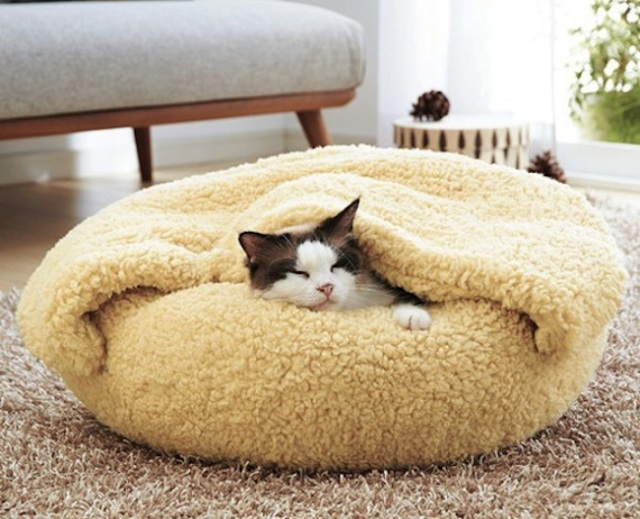 Spoil your pet rotten with this comfy bed and blanket that looks fit for a king!