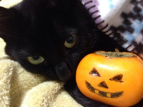 Happy Halloween! Time to decorate your persimmon!