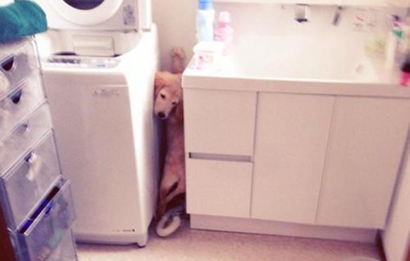 doggyheader