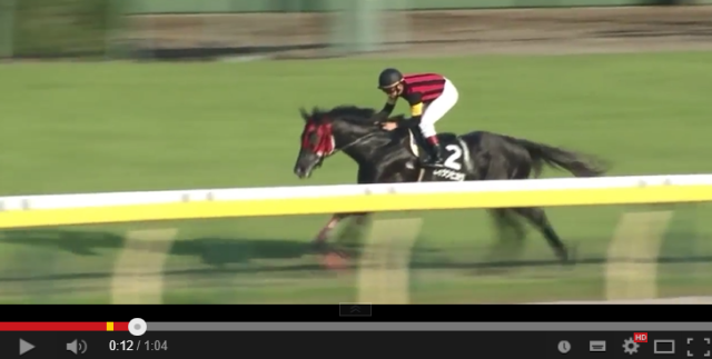 Rising star of Japanese horse racing is as ridiculously fast as he is comically scatterbrained