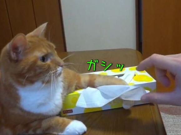 kitty01
