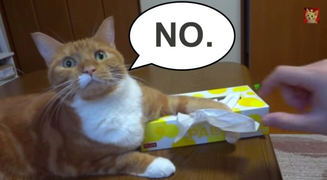 【Monday Kickstart】Kitty defends tissues【Video】