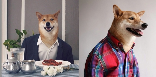Meet Menswear Dog, the world's most stylish Shiba Inu【Photos】