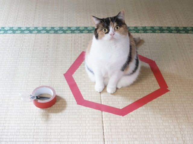 Cats trapped in circles! Japanese blogger shows the best way to outsmart your kitty【Photos】