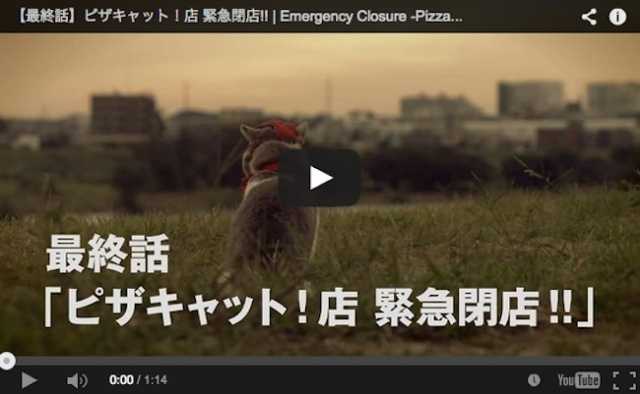 The plot thickens: Pizza Hut Japan's feline employees disappear overnight, forcing store closure 【Video】