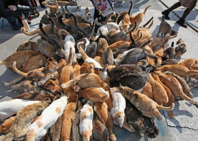"Japan's ""cat island"" Aoshima is being overwhelmed by tourists"