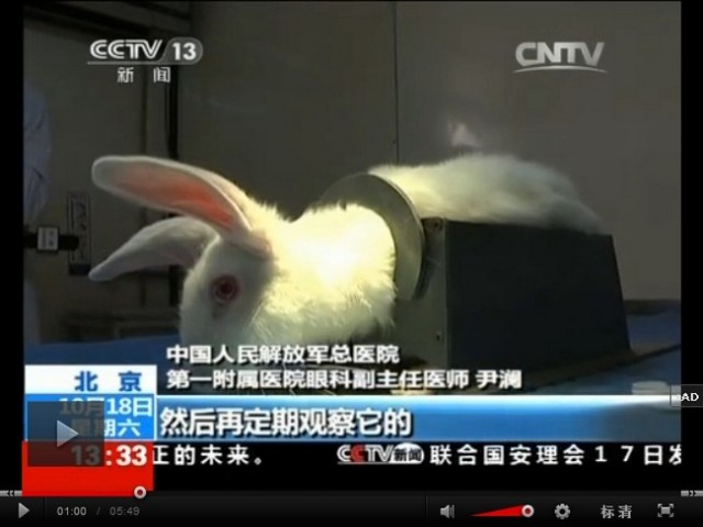 Poor bunnies! Chinese news program makes rabbits wear contact lenses to test what we already know