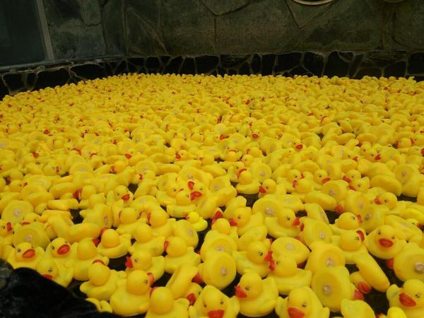 Public baths in Japan add some extra fun with hundreds of rubber duckies