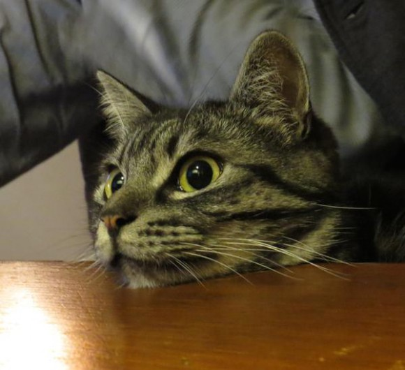 Japan's pet kitties are reportedly spellbound by recent NHK wildlife documentary 【Photos】