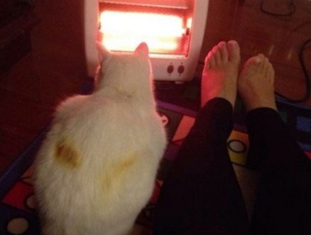 "Pet owners, beware! Cat gets ""toasted"" by a space heater"