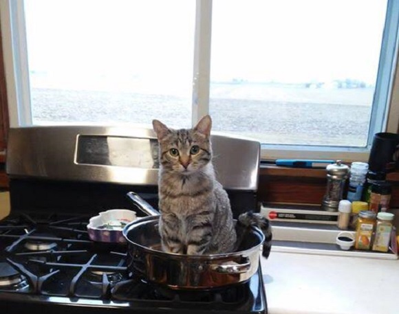 Courageous kitty offers himself up for dinner during tough financial times