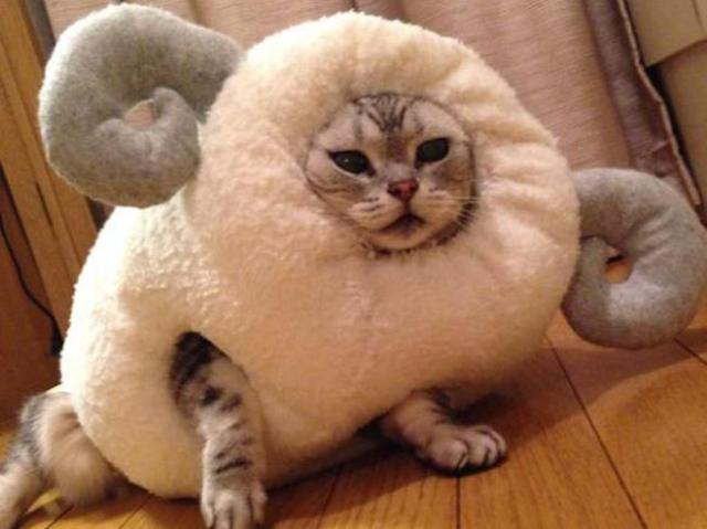 Pet owner celebrates the Year of the Sheep by inserting their cat into ridiculous costume