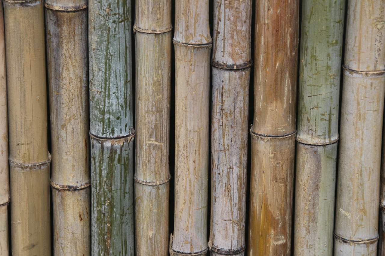 bamboo-68138_1280