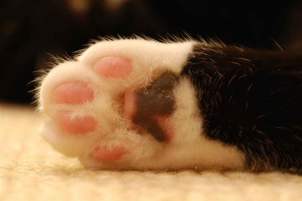 Cat_paw_(cloudzilla)