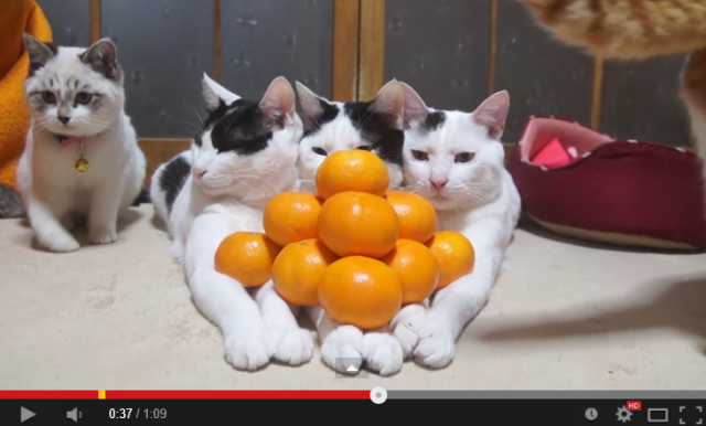 Video series of cats with mikan and kotatsu is also a cute survival guide for Japanese winter