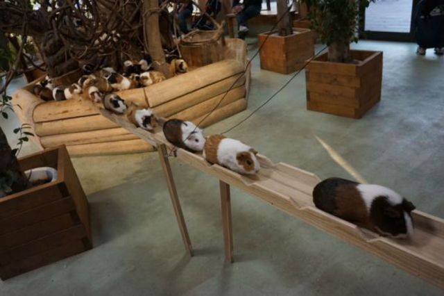 Japan's cutest rodent commuters take the high-road【Video】