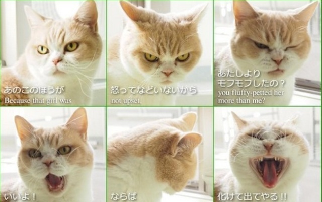 Now even cats in Japan are taking post-breakup selfies!