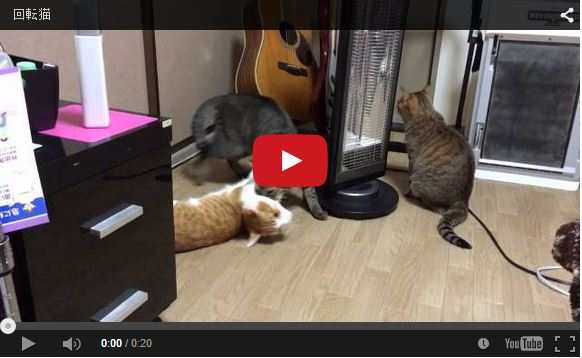 【Monday Kickstart】Care for a spin? Silly kitty randomness to start off your week