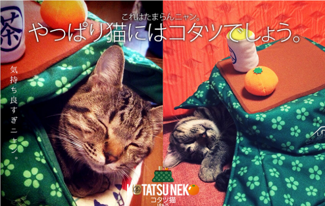 """Catatsu is one of the ridiculous new """"hot"""" items for your pet to wear (yes, wear) this winter"""