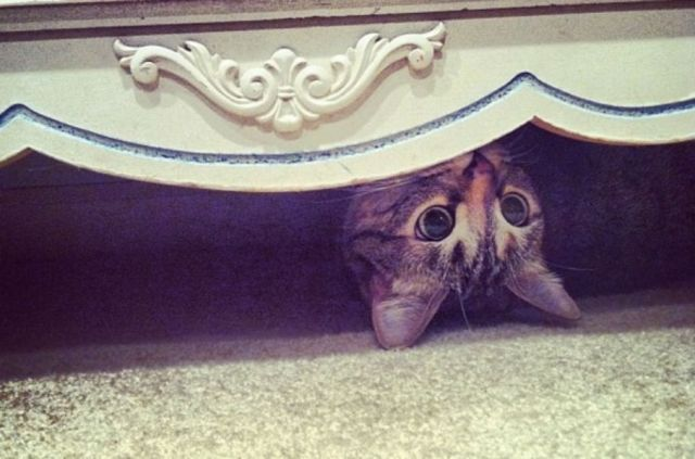 Ninja-cats are hiding in homes around the world and we have 20 photos to prove it