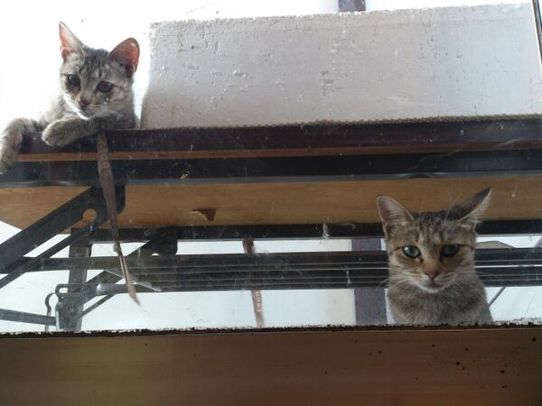 """There's a cat in the window"": A giant compilation of the cutest peeping Toms you'll ever see"
