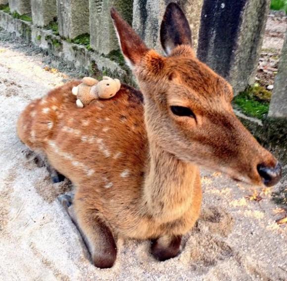 Kitties, doggies, bunnies, and deer – even more stuff balanced on Japan's pets!