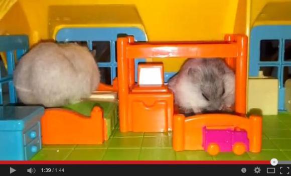 hammy sleep