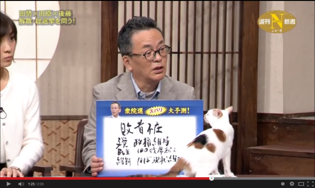 Think Japanese news is boring? Try it with some cats!