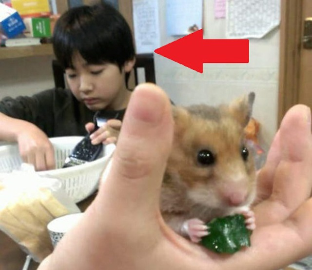 Cute hamster! Wait, what's going on back there? Unintentional photobomber's tale goes viral